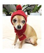 bonnet d'hiver pour chihuahua