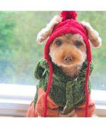 bonnet pour chien de petite taille