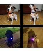 pendant light for dog