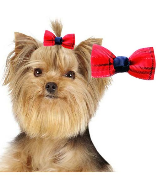 scottish barrette for small chic red dog