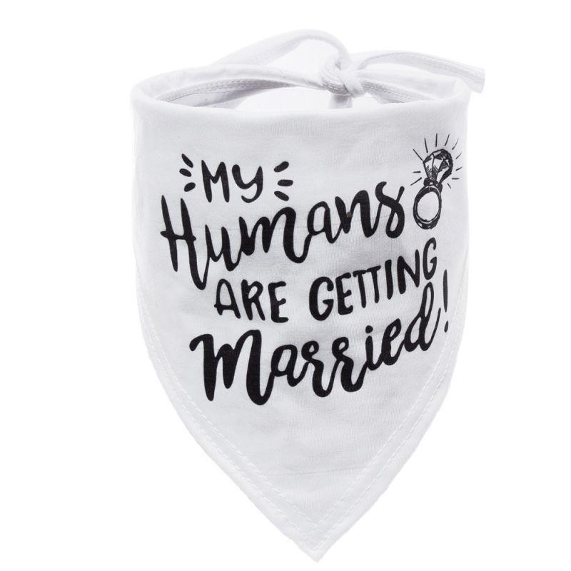 accessoire pour chien mariage