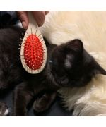 cat brush with spikes