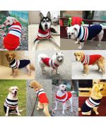 pull pour chienne grande taille