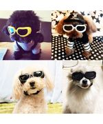 lunette soleil small dog's mouth d love france belgium switzerland dom-tom martinique French guiana guadeloupe