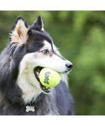 balle de tennis pour grand chien