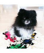 tapis de fouille pour chien pas cher