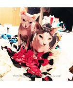 tapis de fouille pour chat original