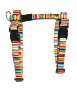 harness and leash rainbow cat
