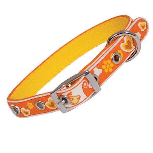 collar for small colorful dog