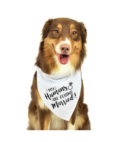 accessoires mariage pour chien