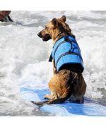 gilet de sauvetage pour grand chien
