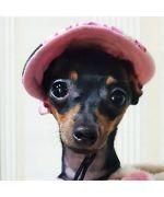 Cap for dog, rhinestone - Blue