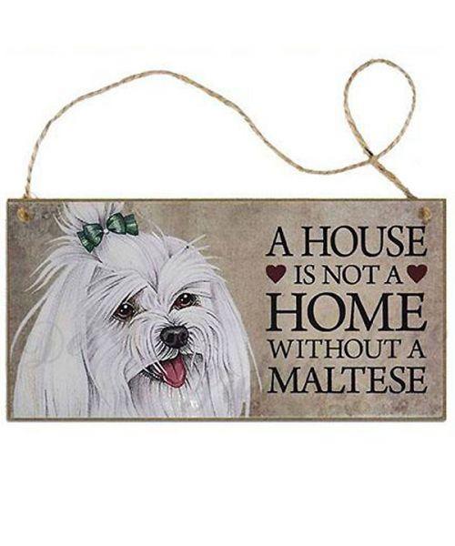 plate house bichon maltese
