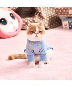 pajama cat
