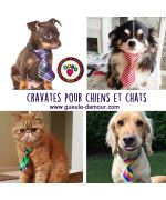 cravate pour chat