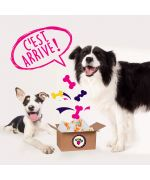 Box surprise for dog gueule damour