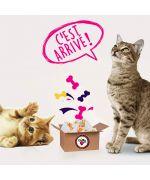 Box Surprise Pour chat