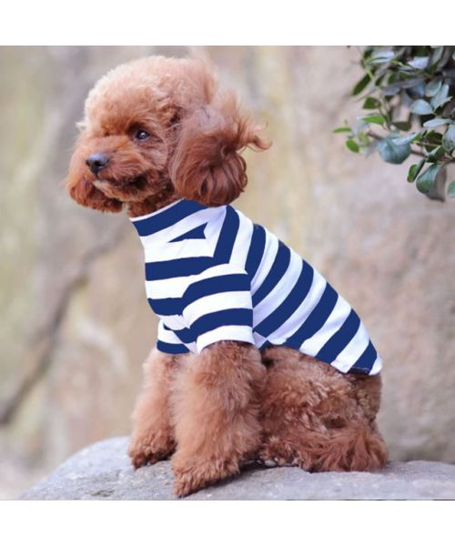 chic dog sweater