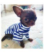 pull pour petit chien marin