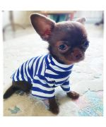 sweater for a small dog mouth love blue white red