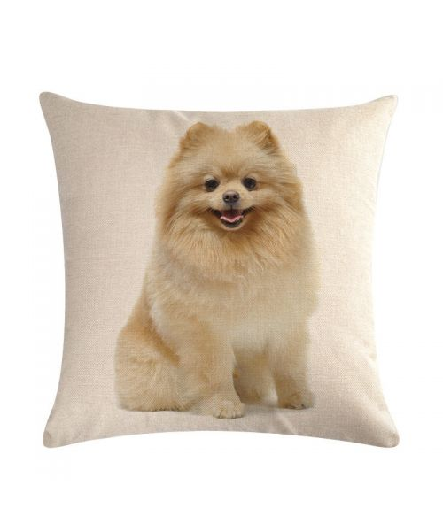 cushion with spitz