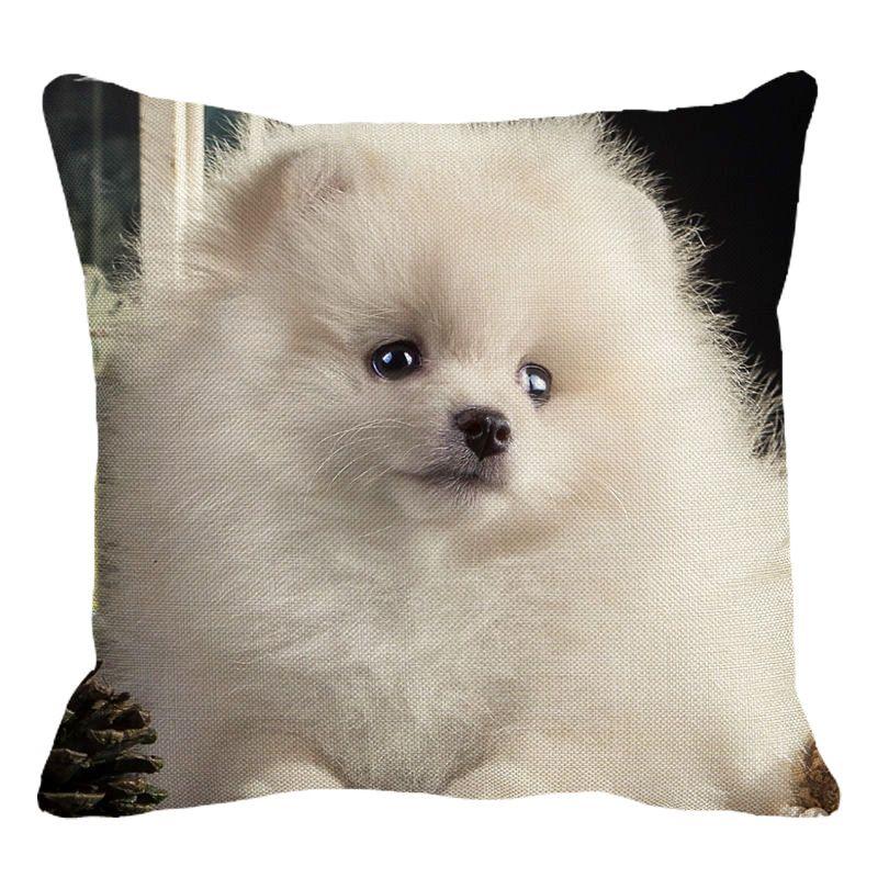 white spitz cushion