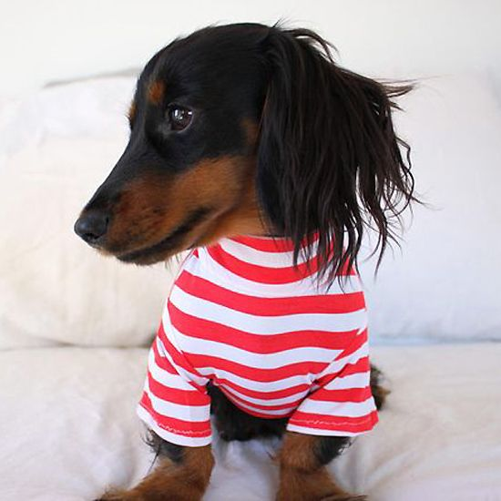 red sailor sweater for dog