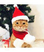 accessoires de noel pour chat