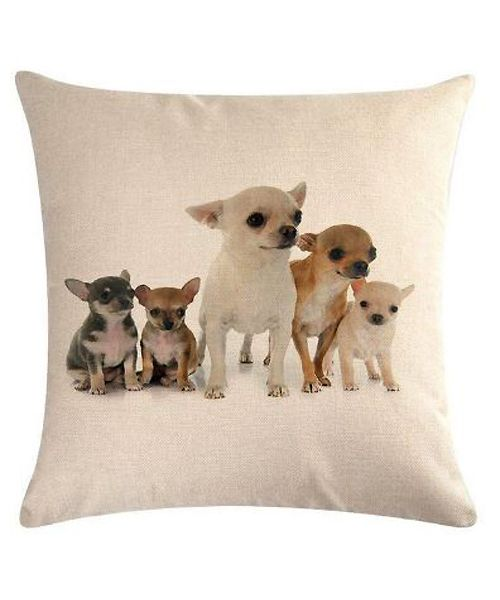 coussin chihuahuas