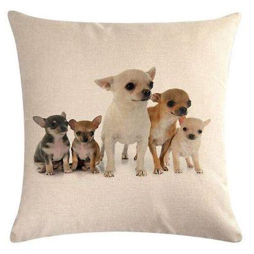 chihuahuas cushion