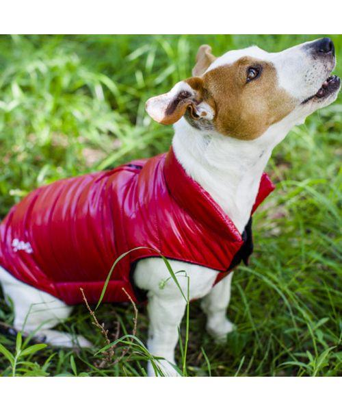 manteau rouge pour chien