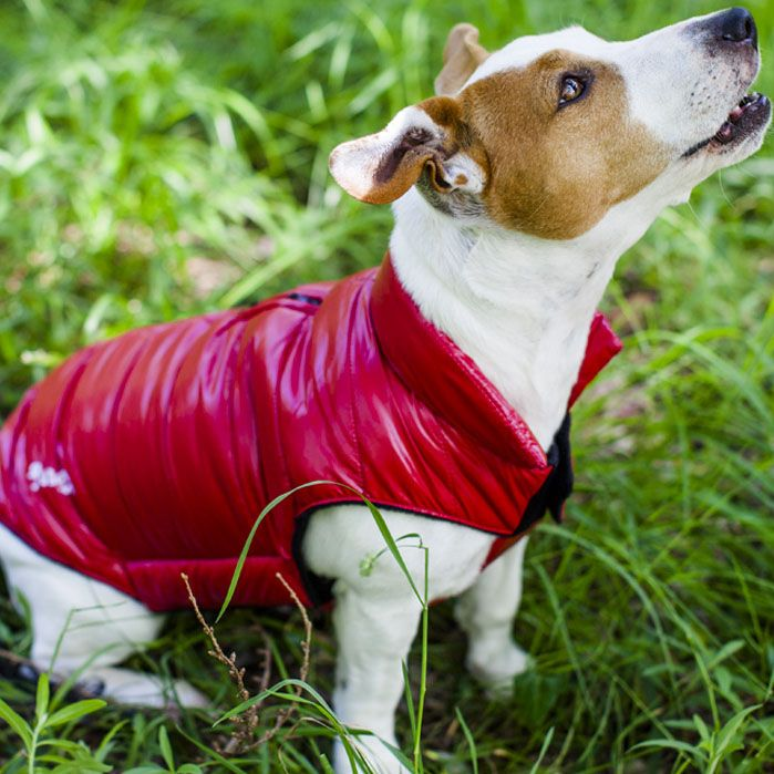 red coat for dog