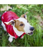 Warm coat for jack russel