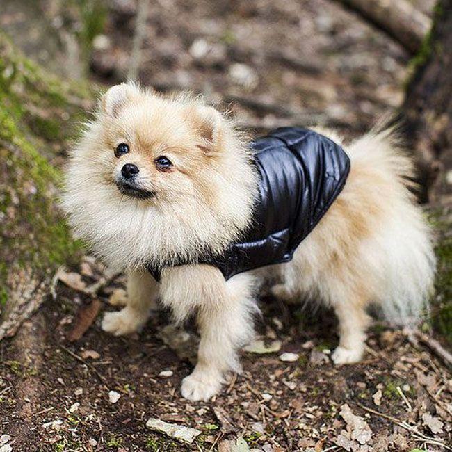 warm down jacket for spitz