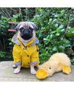 coat for pug