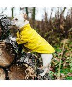 Light down jacket for dog - blue
