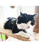 cadeau de noel original pour chat