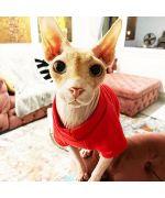 tenue pour sphynx chat