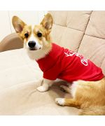 party outfit for corgi