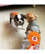 pull en laine pour chien sympa