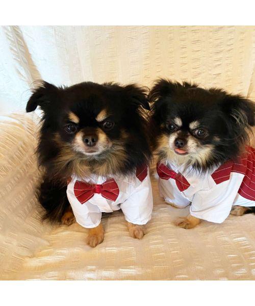 dog wedding vest
