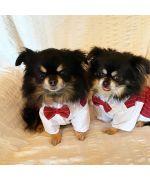 gilet de mariage pour chien
