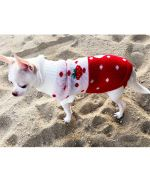 warm dog sweater for winter