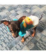 Sweater dog turtleneck Small Deer