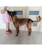 culotte pour chienne de grande taille