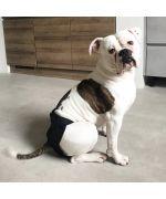 culotte pour grand chien