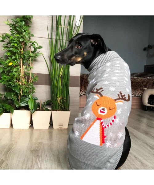 Pull pour grand chien