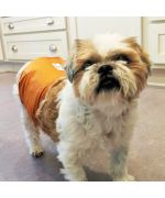 diaper for male dog