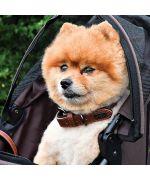 collier élégant pour chien
