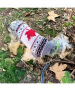 sweater for yorkie